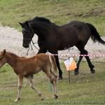 Участники разные бывают - лошади (Башкортостан)
